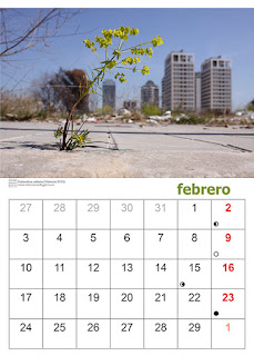 Imagen de una página del calendario con una planta en flor creciendo en el suelo