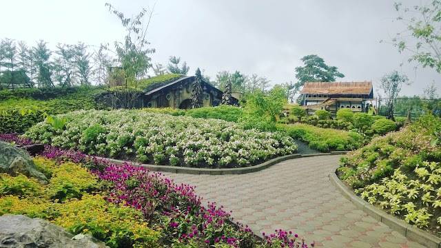 Banyak taman bunga Farm House Susu Lembang yang indah