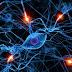 Hallado uno de los mecanismos genéticos que desencadenan la degeneración neuronal en el alzhéimer
