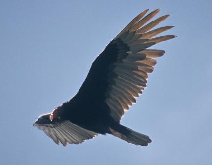 Wild Birds Unlimited August 2014