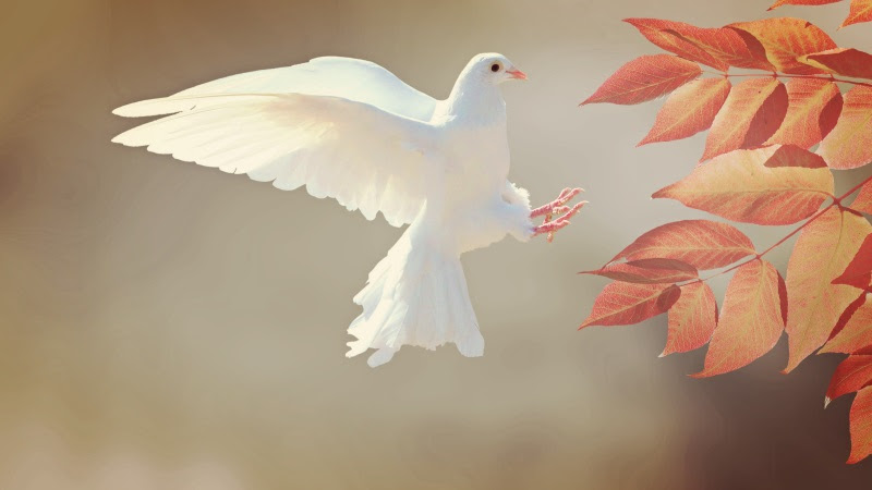 White Dove Flying