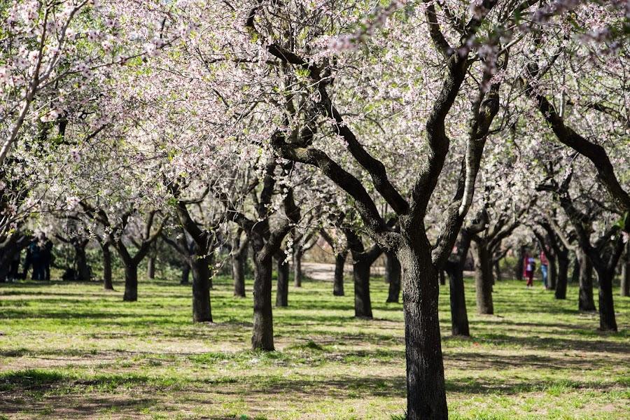 Quinta de los Molinos, Madrid