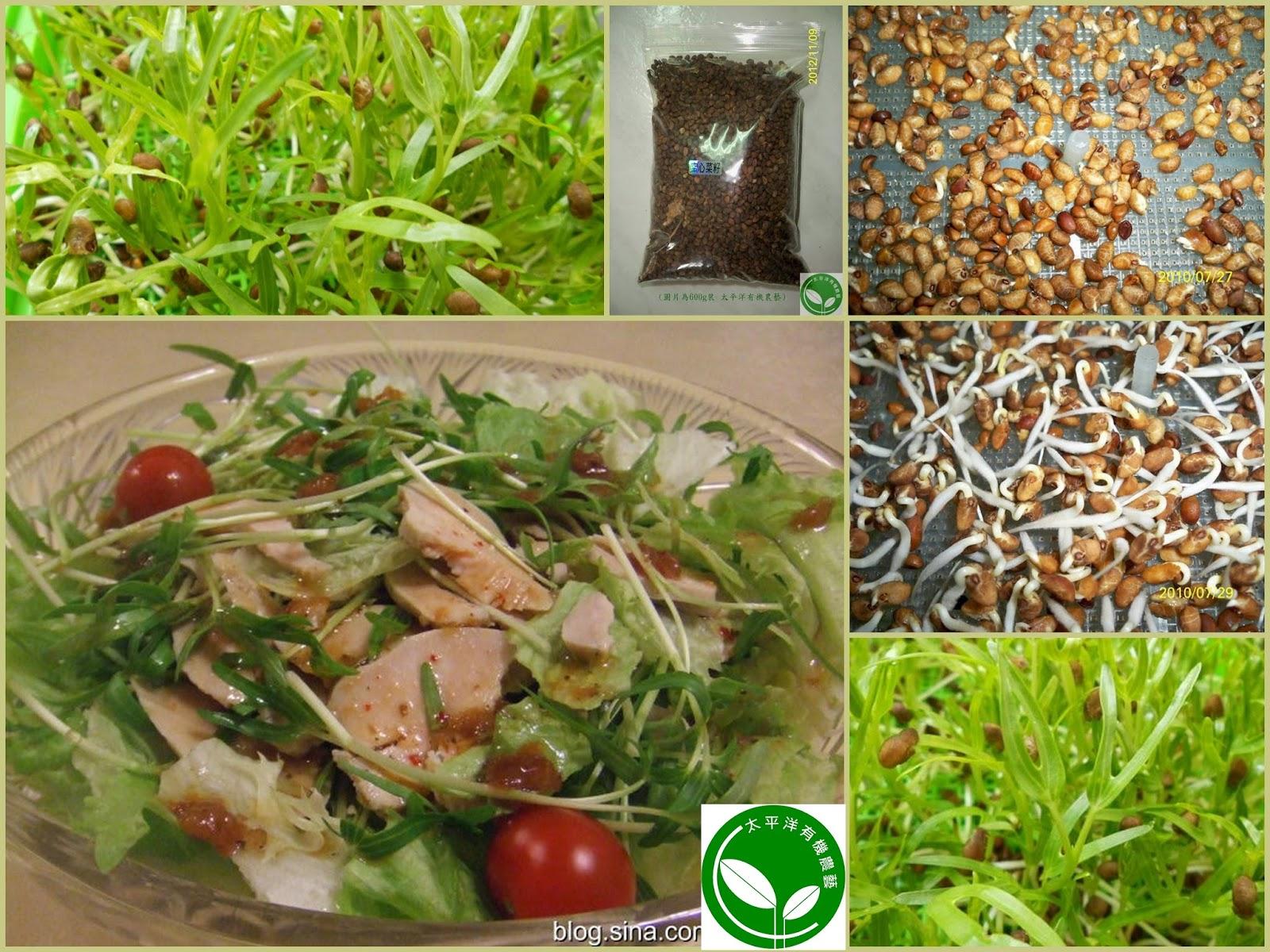有機黑豆芽、有機苜蓿芽、有機綠花椰芽菜、有機紫高麗芽菜、有機小麥草