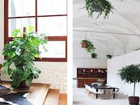 Tips Menata Houseplant, Perpaduan Tanaman dan Interior Ruangan