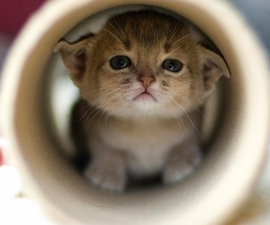 Top HD Wallpapers: Small Cats Cute Babies Wallpaper