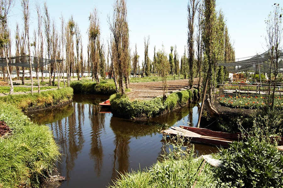 http://www.xataka.com.mx/ciencia/desechos-organicos-podrian-ser-la-clave-para-rehabilitar-chinampas-de-xochimilco