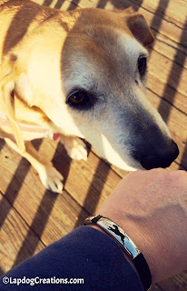 I love my Run to Rescue Dog bracelet from #PawZaar - Global Style for Pet Lovers! #rescueddogs #adoptdontshop #animalwelfare #rescue #LapdogCreations ©Lapdog Creations