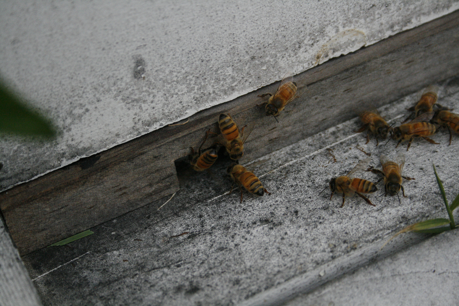 Beekeeping From The Beginning Closing Up For The Fall