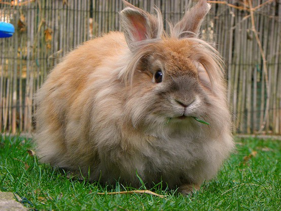 bunny cute bunnies super adorable part fluffy amazing funny flickr create pro gonna melt tiny heart re they
