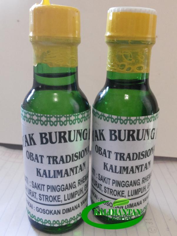 minyak burung bubut kalimantan kecil pusat ramuan asli