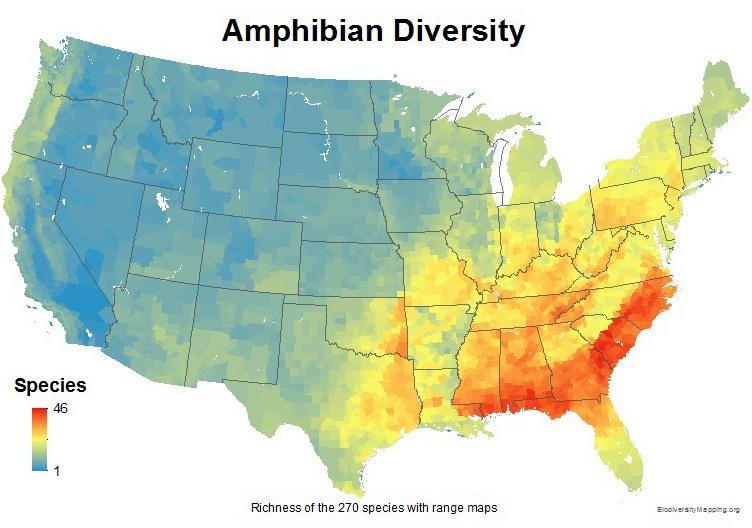Amphibian diversity