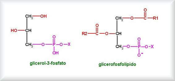 Bioquímica Clasificación De Lípidos