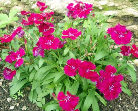 Color en el jard n todo el a o plantas que florecen en - Plantas exteriores todo el ano ...