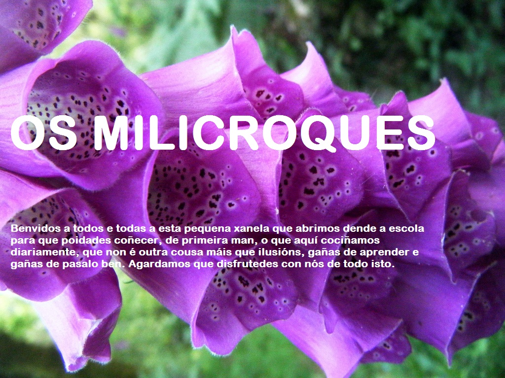 OS MILICROQUES