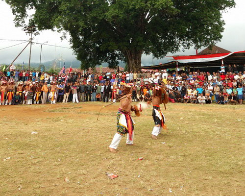 Travel.Tinuku.com Caci is one on one fighting dance used whip and shield as harvest thanksgiving in Manggarai, Flores island