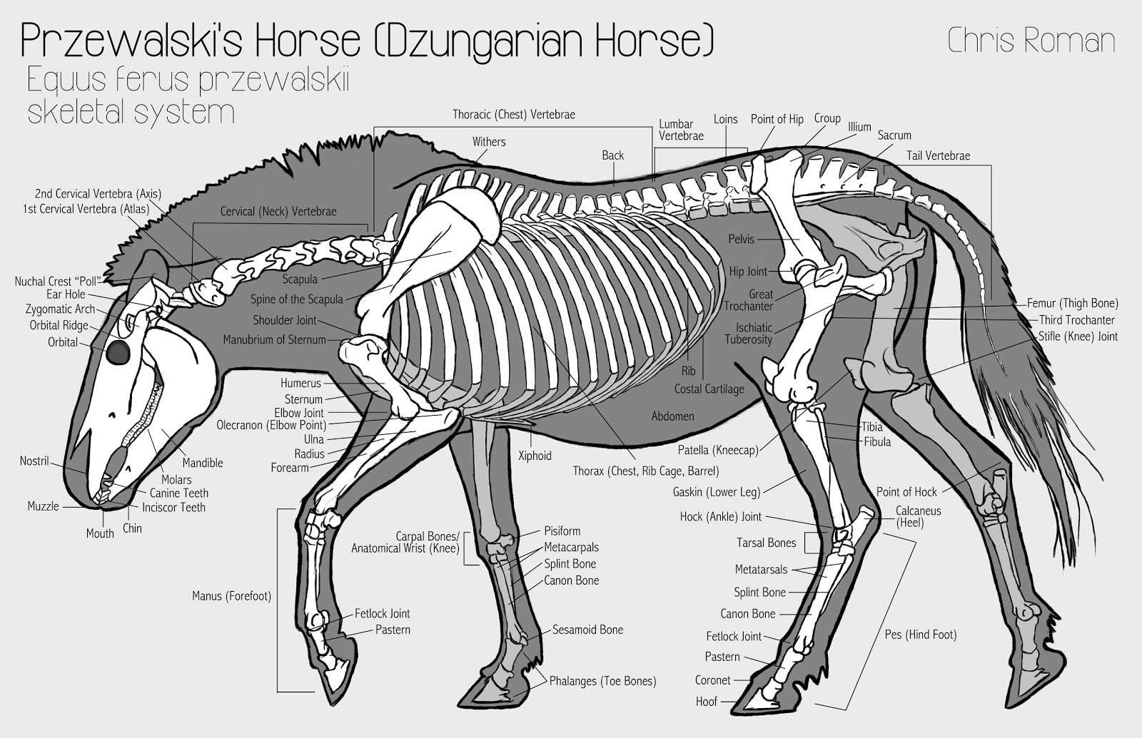 horse neck diagram 1986 winnebago wiring whats the optimal position of hooves