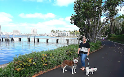The Palm Beach Trail runs along the intercoastal waterway in Palm Beach.  It's a great dog friendly walk, right across the Flagler Memorial Bridge from West Palm Beach, Florida.  A great dog friendly vacation destination with dogs or other pets