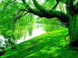 Risultato immagini per foto natura colore verde