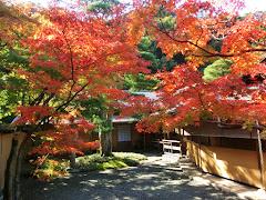 旧一条恵観山荘の紅葉