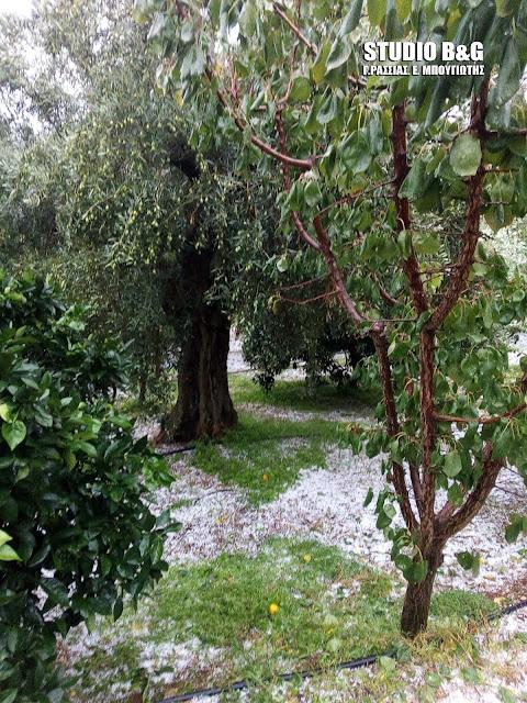 Αργολίδα: Μεγάλες καταστροφές σε καλλιέργειες στην περιοχή της Χούνης στο Άργος