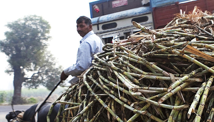 sugarcane-farmer-in-india