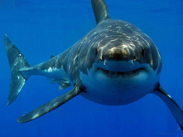 تفسير القرش في المنام
