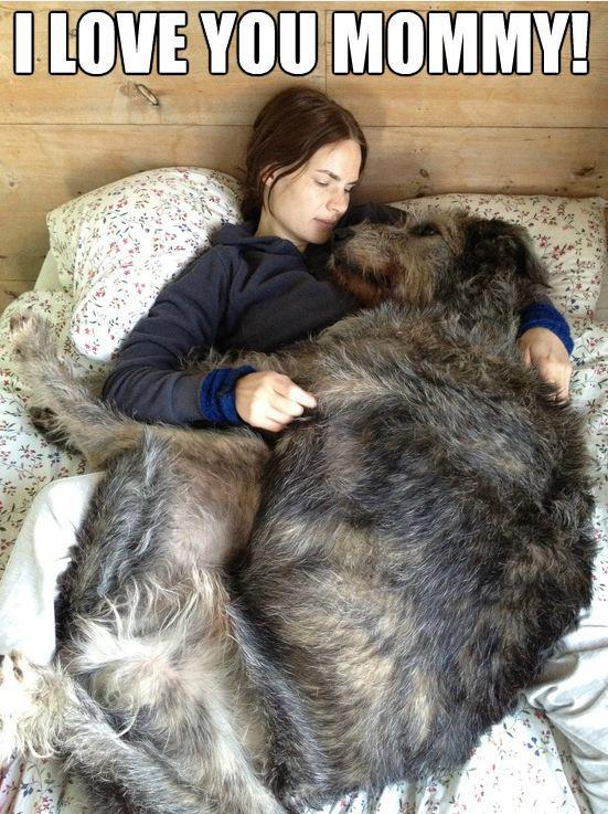 Cute and Funny Pictures and more: Very Big Blanket of Dog Love