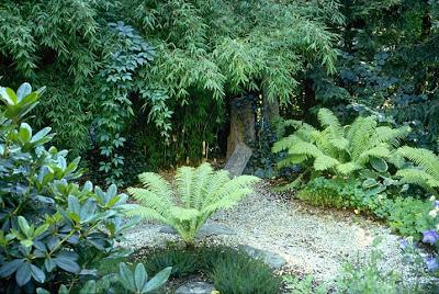 Dachgarten Pflanzplanung, Bepflanzung mit Immergrünen, Farnen und Gräsern