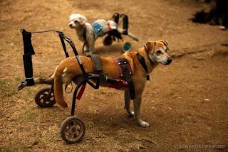 Audiovisual sobre Milagros Caninos. Fotografías, audio y producción por Chico Sanchez.