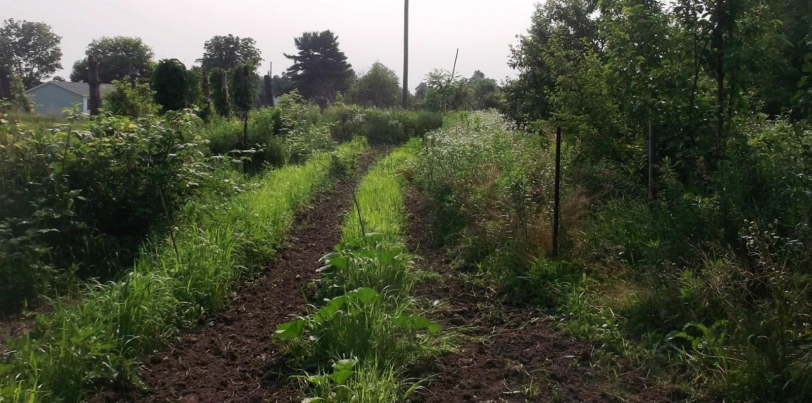 Flower Garden Eaton Rapids Michigan: Eaton Rapids Joe: Gardening Pictures