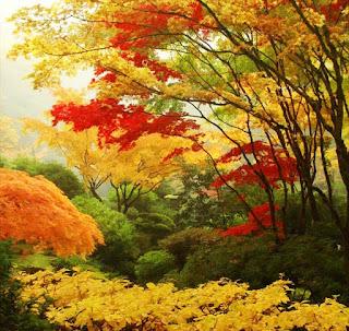 الحديقة اليابانية المذهلة أمريكا japanesegarden12.jpg