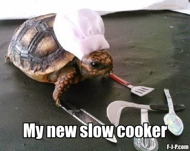 Funny Slow Cooker Tortoise Joke Picture