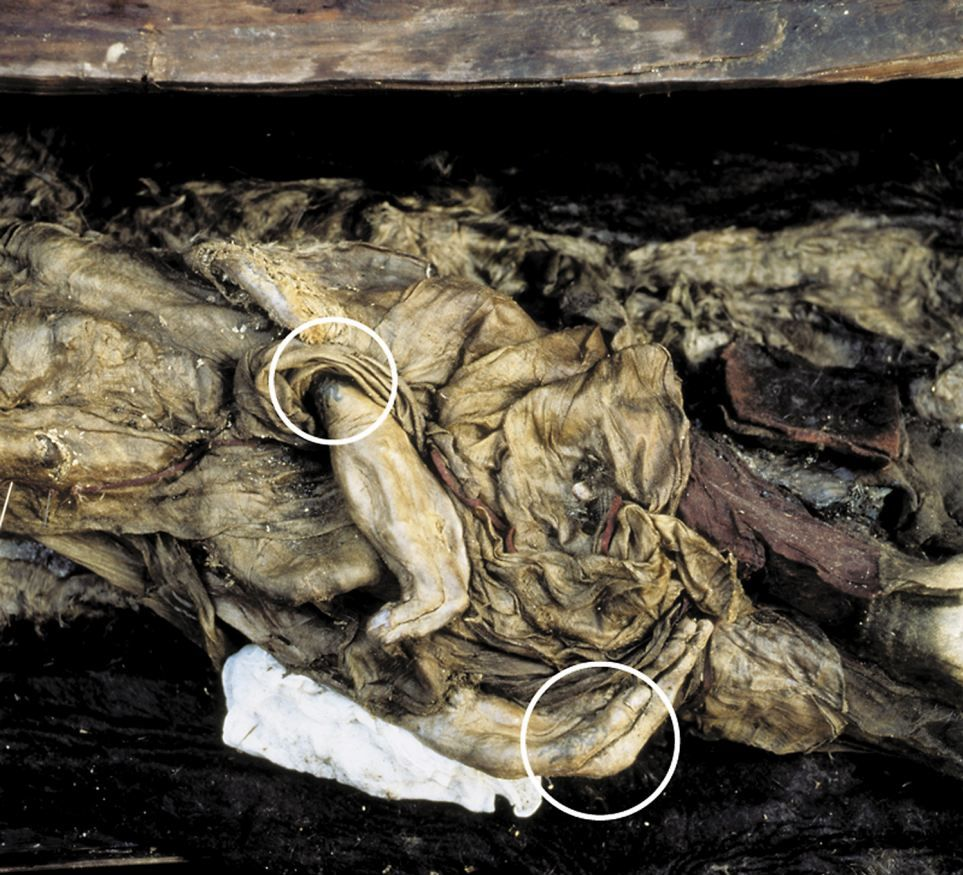 2500 Year Old Tattooed Siberian Mummy Found