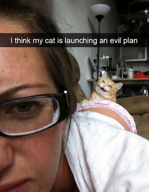 Best Cat Memes 2
