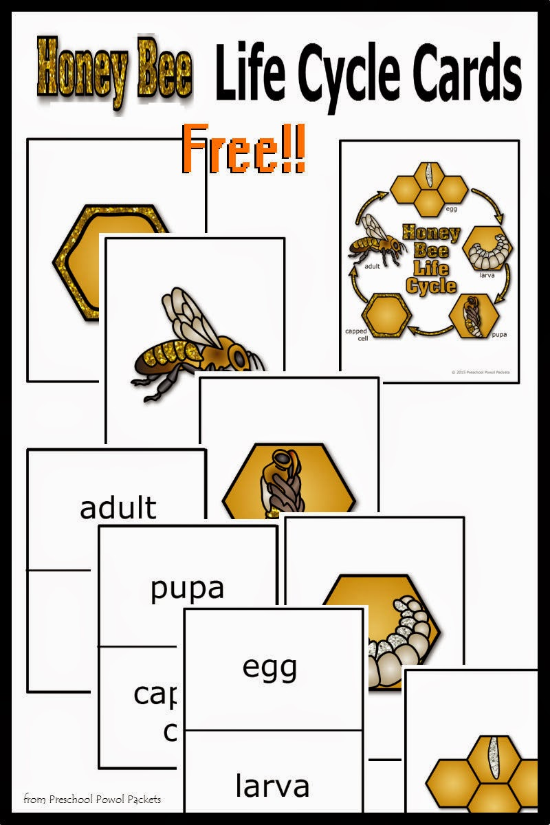 {FREE} Honey Bee Life Cycle Cards! | Preschool Powol Packets - photo#29