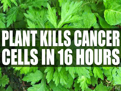 Scientists Find Plant That Kills 98% Of Cancer Cells In Just 16 Hours