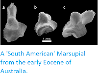http://sciencythoughts.blogspot.co.uk/2013/05/a-south-american-marsupial-from-early.html