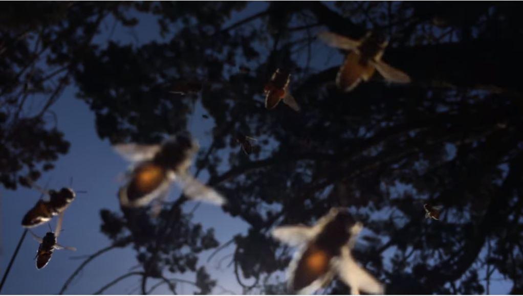 Canzone Pubblicità iPhone | Spot con api-vespe | Giugno 2016