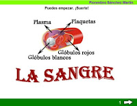 http://cplosangeles.juntaextremadura.net/web/edilim/tercer_ciclo/cmedio/las_funciones_vitales/la_funcion_de_nutricion/circulacion/la_sangre/la_sangre.html