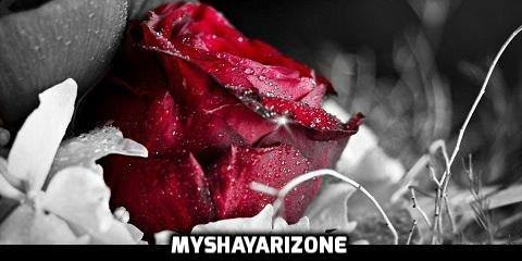 Different Meanings and Significance Associated with the Colours of the Roses - Rose Day 2018