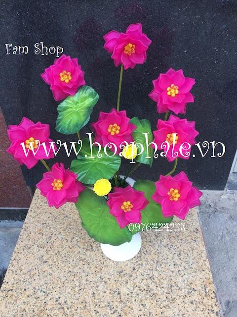 Hoa da pha le o Vinh Tuy