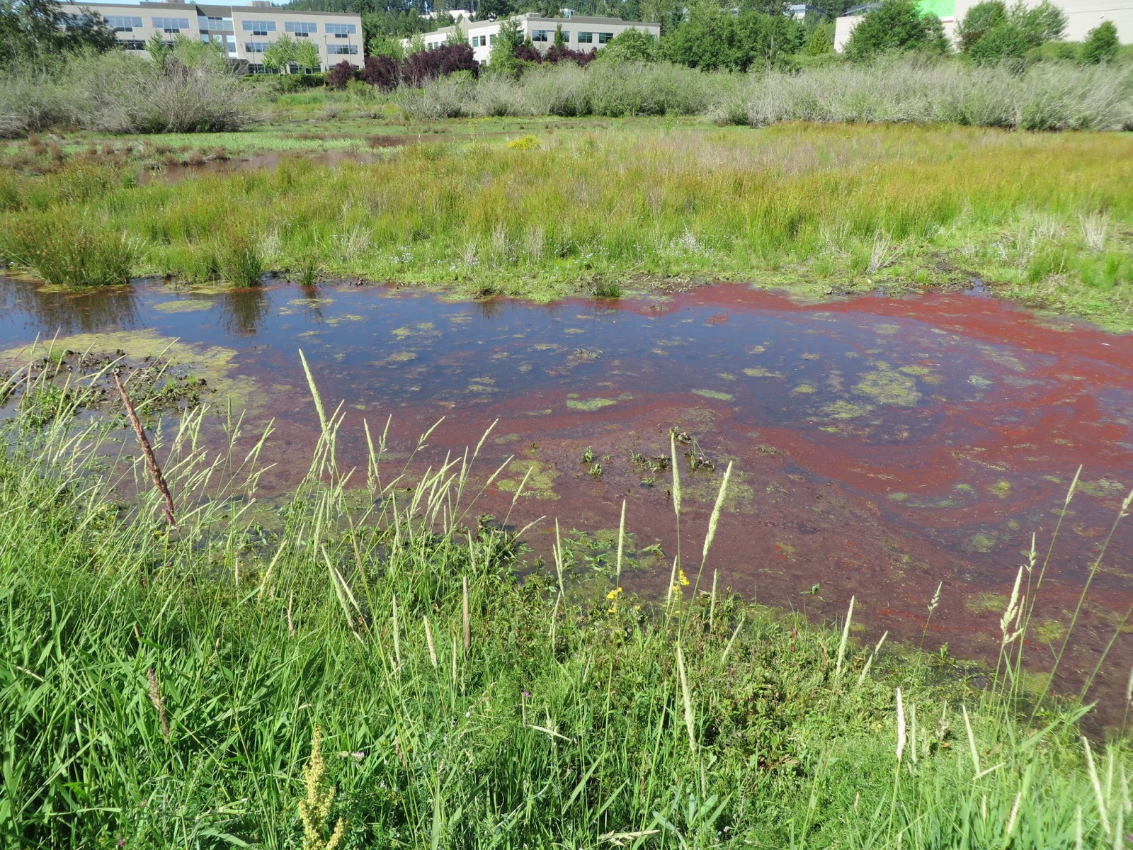 Real Everything Else: The random stuff post for the month