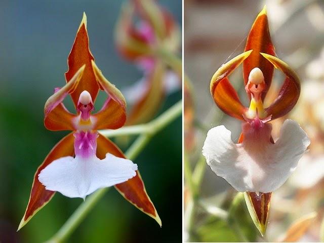 http://tipspetani.blogspot.com/2016/11/bunga-bunga-indah-yang-ternyata-beracun.html