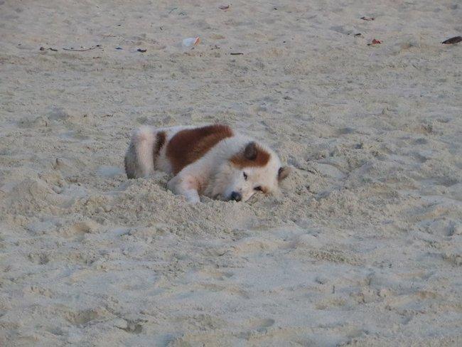 Спящий собака на пляже Таиланд