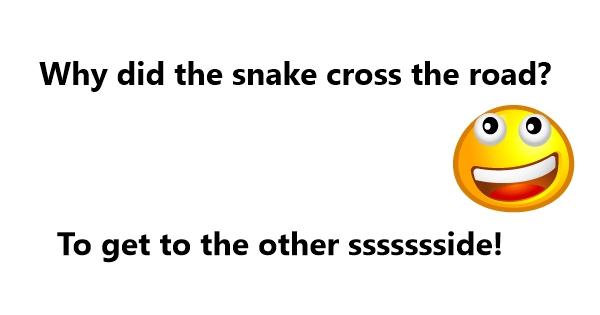 Snake Jokes For Kids | Kappit