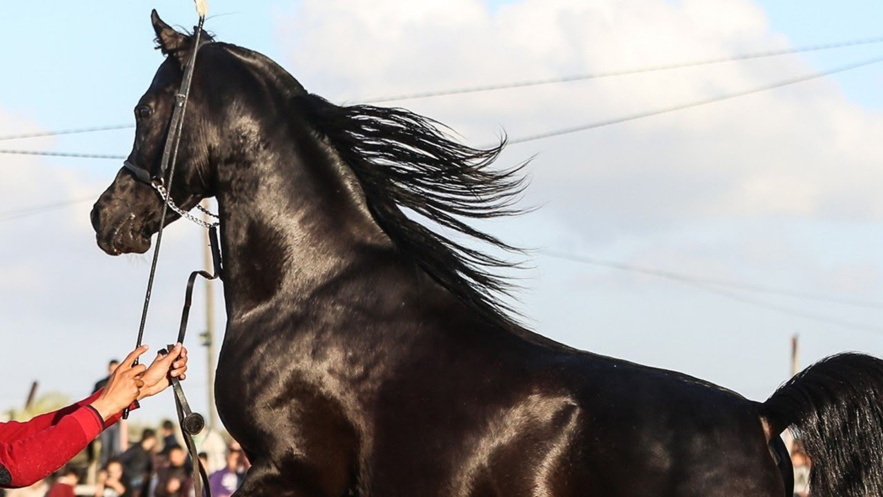 horse-lineage-evolution-cavalos-linhagens-evolucao-vetarq