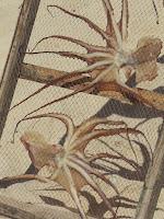 Pulpos en secadero (Playa de Nazaré)