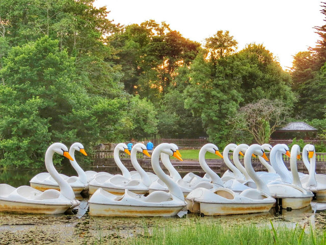 Travel Ireland by Rail from Dublin: Swan Boats in Westport, Ireland