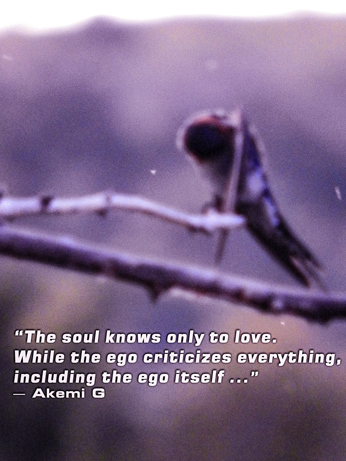 'The soul only knows how to love. While the ego criticizes everything, including the ego itself' - Akemi G
