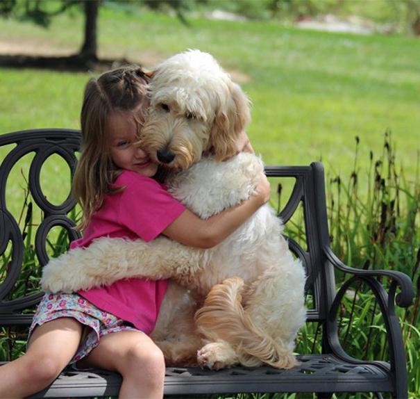 Vì sao chó hay đặt chân lên người của chúng ta?